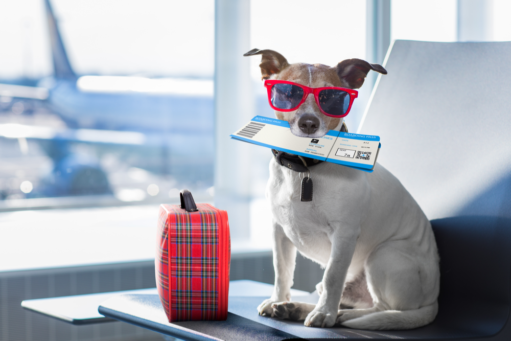 Procedures to follow before you carry pets on a flight to India