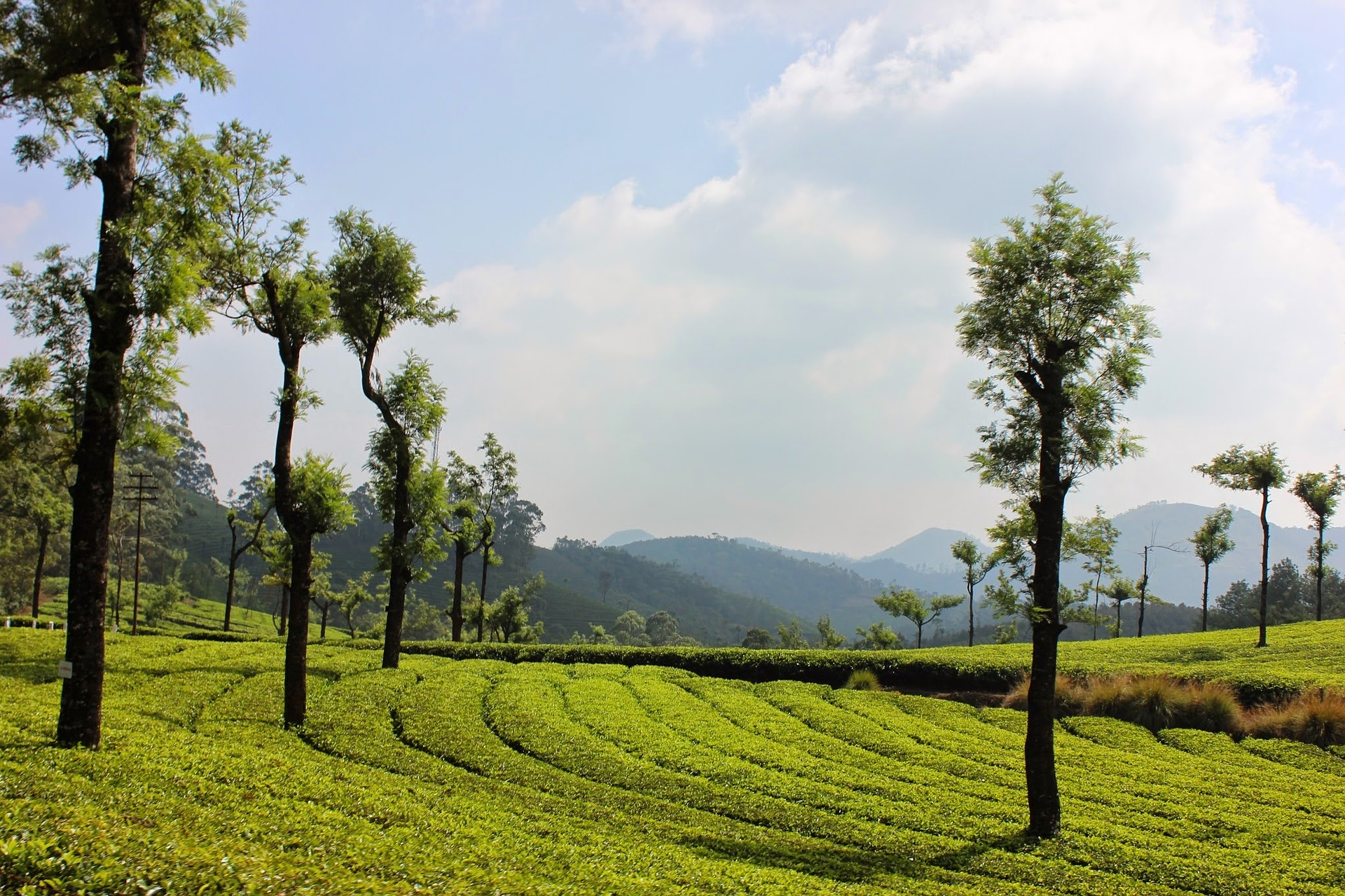 landscape Munnar Kerala