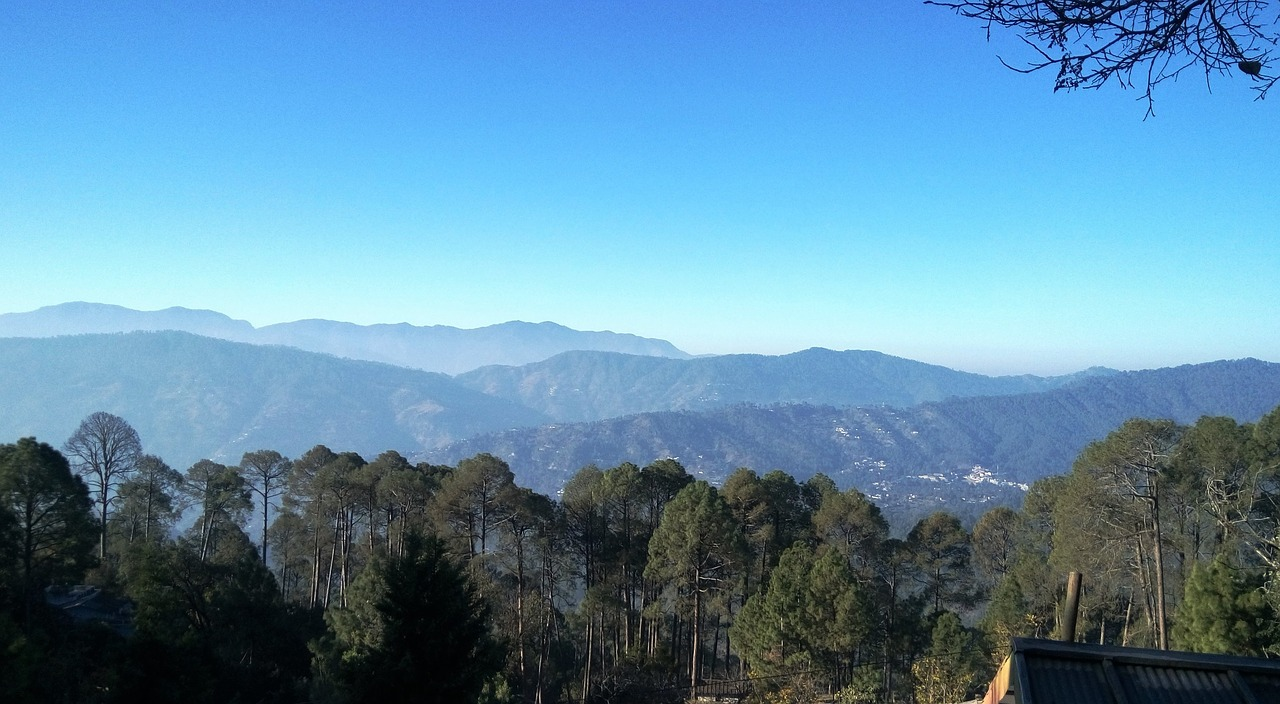 trees and hilly area in the ranikhet